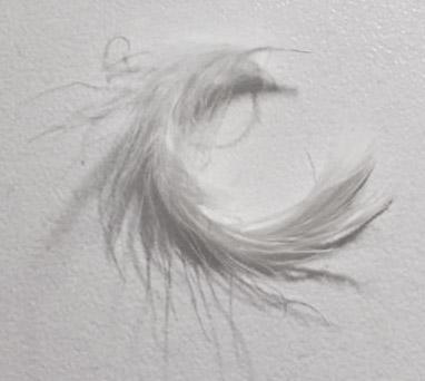 veer via Angel-Wings
