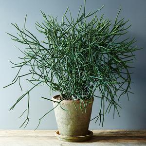 De lastigste plant ooit...
